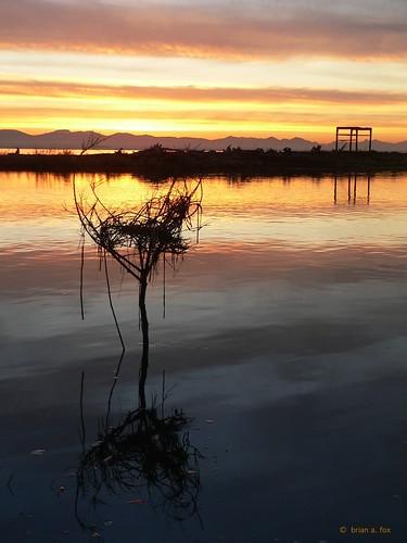 driftwood sunset river ocean garrypointpark steveston