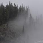 Trees in the fog near Scalplock Lookout