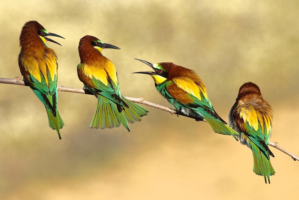 Animal Wallpaper Hd Wallpaper Beautiful Birds Nature A Flickr