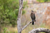 Cormorant Relaxing at Khem Villas by jeff_a_goldberg