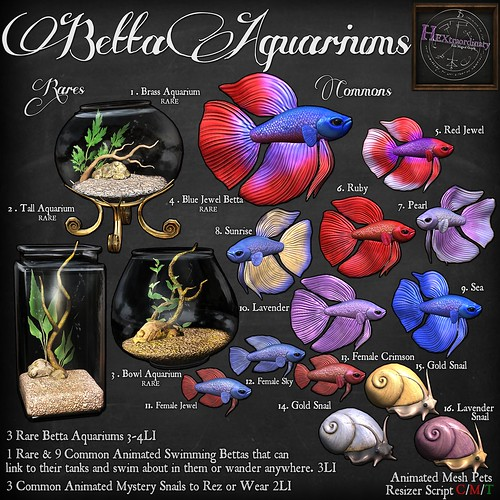 Betta Aquariums @ The Arcade! | by HEXtraordinary!