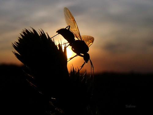 macromonday silhouette bug sunsetgrass rural ohio