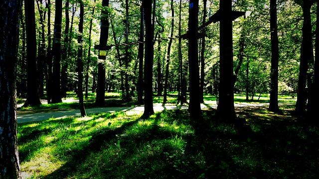Drzewa.Trees