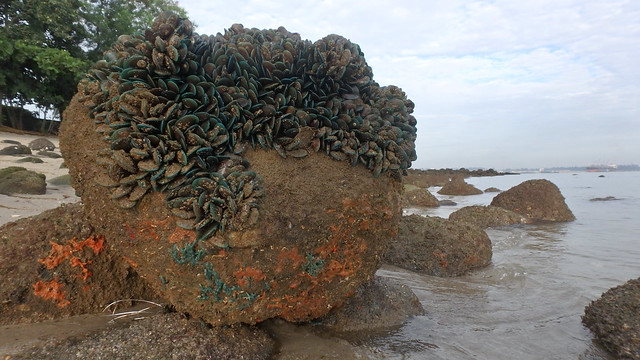Living rocky shores of Punggol