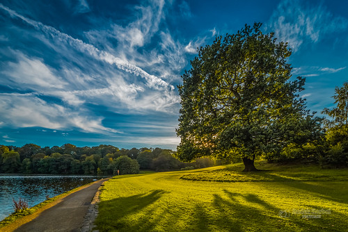 roundhaypark park roundhay leeds westyorkshire yorkshire water clouds sky tree autumn tbnate d750 nikon nikond750 samyang samyang14mm 14mm ultrawideangle ultrawide shadow outdoor outside landscape grass lake nature sun