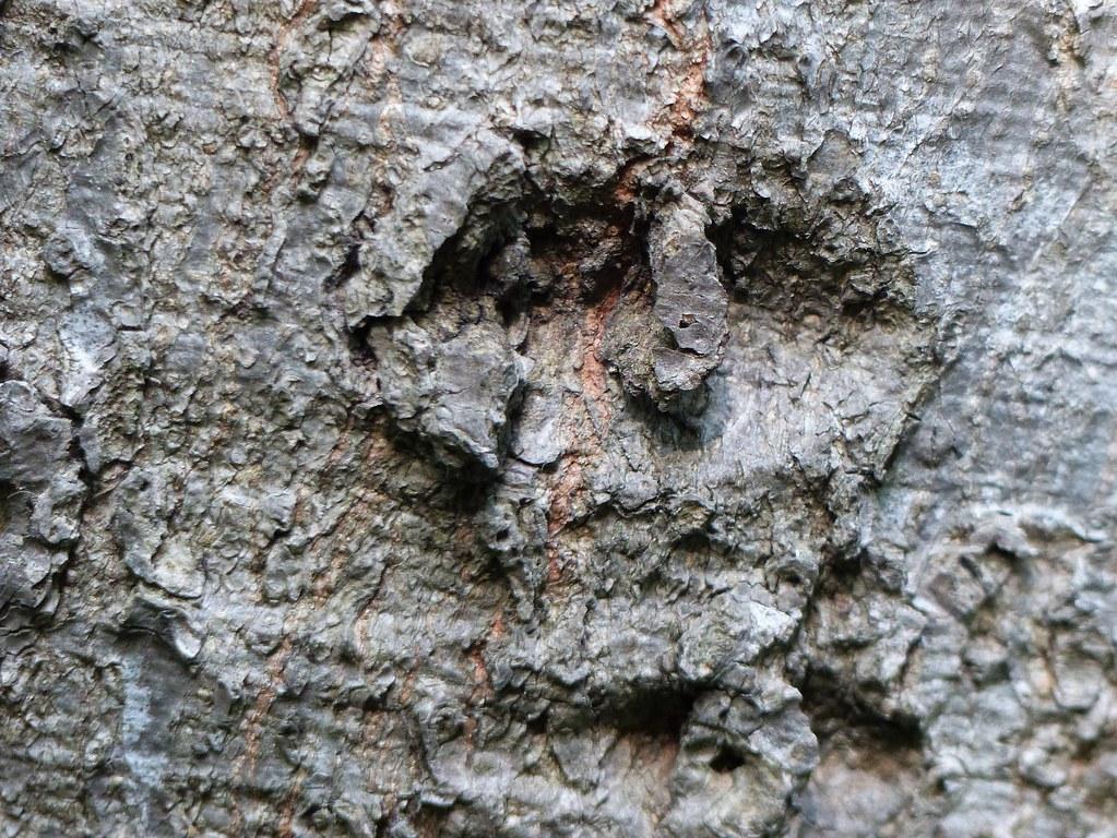 The spirit of the oak