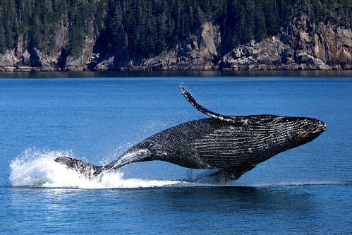 0F1B6076   by AlaskaNPS
