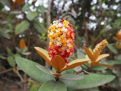 Flora nativa - Lavras Novas