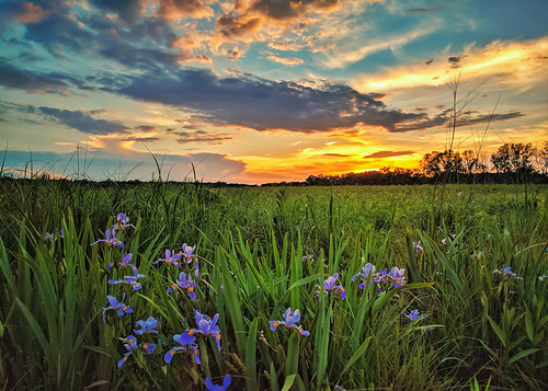 june4th landscape summer2017 sunset deergroveforestpreserve cookcountyillinois flowers tallgrass