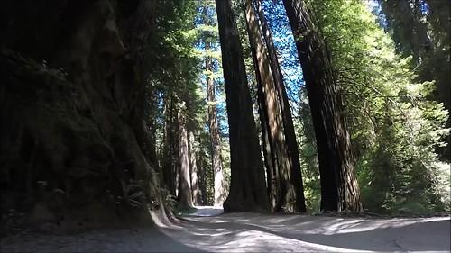 jedediahsmithredwoodsstatepark california sequoiasempervirens howlandhillroad oldgrowthforest coastalredwoods gopro hero3silveredition suctioncupmount ancienttrees