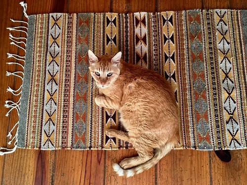 Simba likes his new little rug !   by rainy city