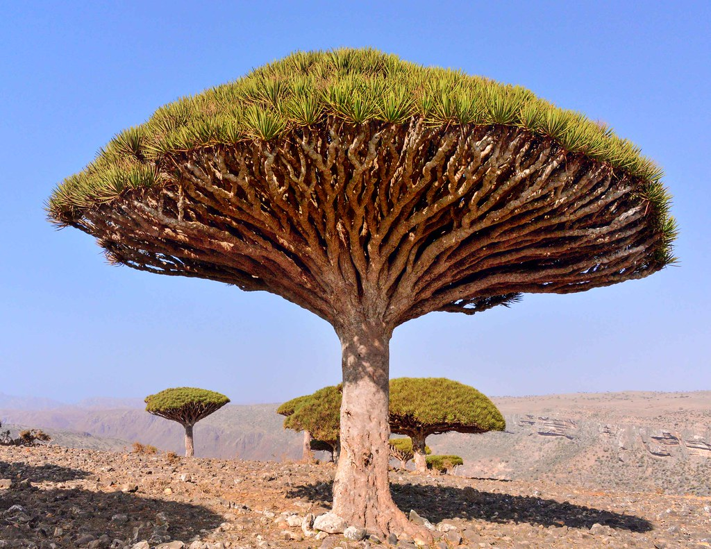 Image result for socotra islands""