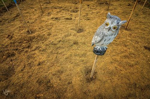 overseer of bone-dry garden