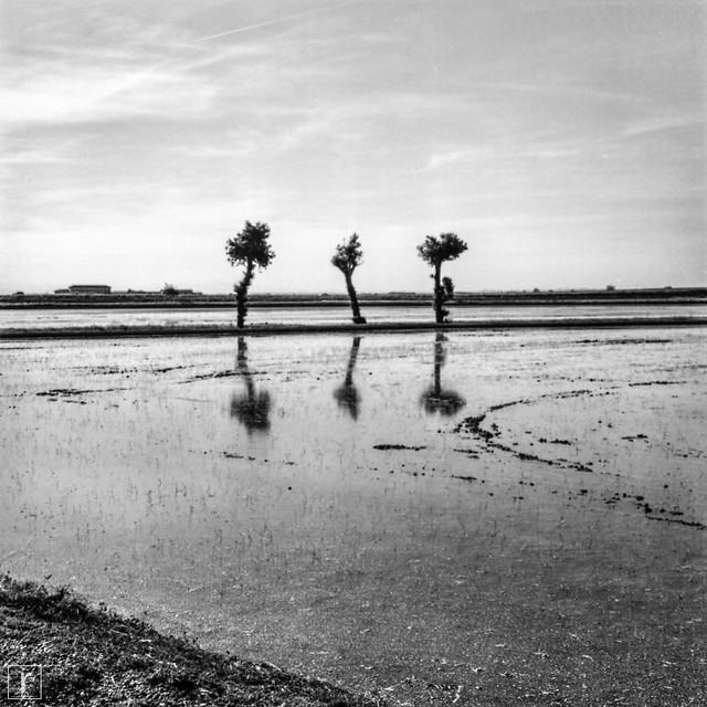 Rice field 3 minus 1