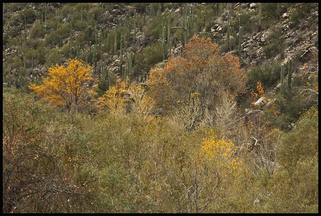 Sabino Canyon #31 2017; From Above