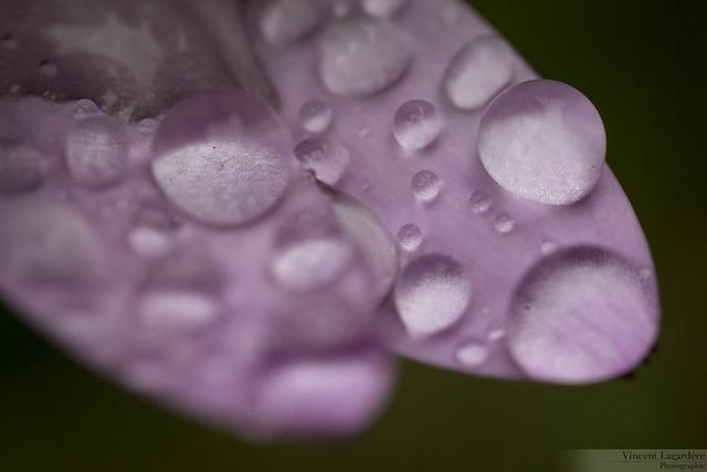 Droplet studies