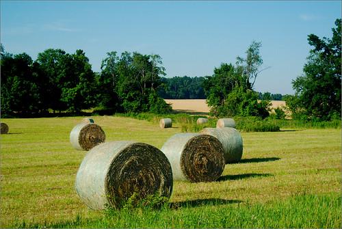 field raw farm farming hay bales joeldinda 1v1 130365