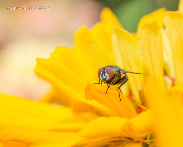 Brookside Gardens Fly 3