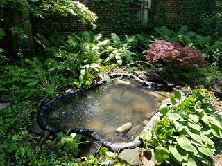 Backyard Pond | by lmorchard