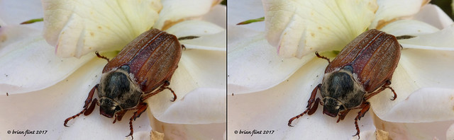 Large Beetle - 3d cross-view