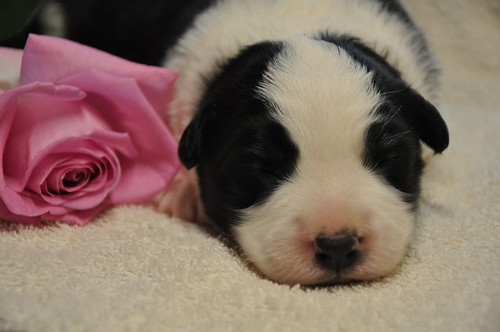 pup6 nieuws | by flaxblossoms.be