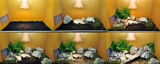 setup for Vipera ammodytes | by markusOulehla