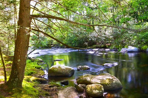 nature forest river woods outdoors landscape connecticut newengland natchaug