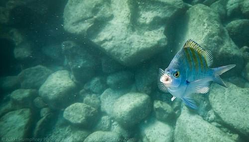 Fishy Face