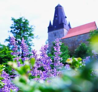 ....Lavendel