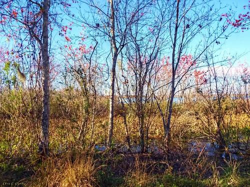 peekaboolake thelakewoodruffnationalwildliferefuge deleonspringsflorida centralflorida nature park outdoor scenic landscape