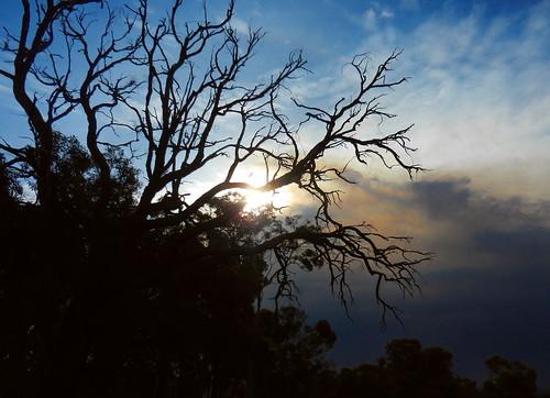 western australia bannister sunset eucalyptus sun tree landscape bush sky cloud dana iwachow nikon s9200