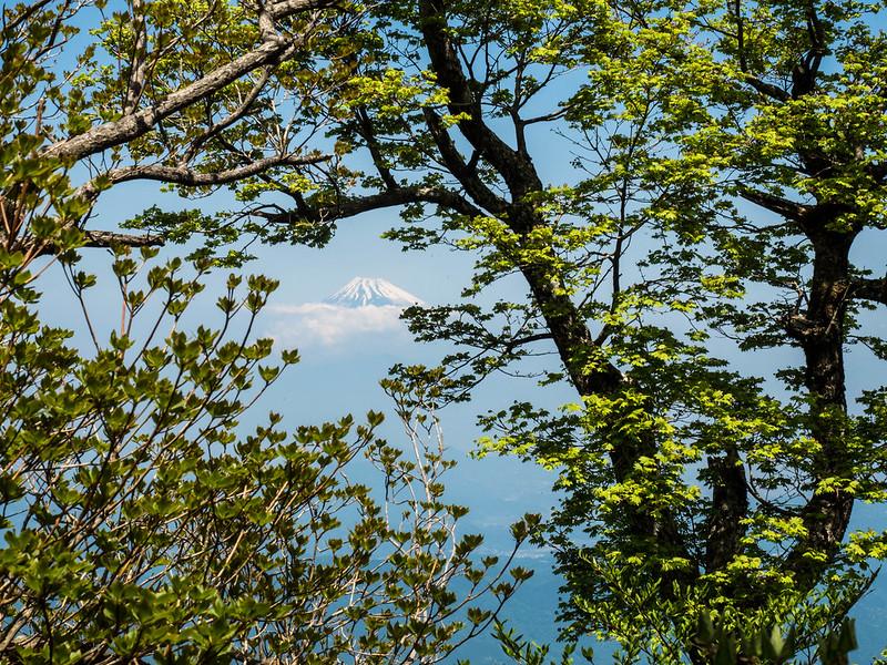 天城山から富士山