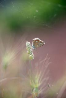 papallona-2 | by davin´s