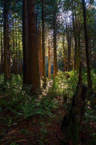 2017 forest kiriwhakapapa kiriwhakapapacampsite landscape masterton newzealand scenic sonyrx100m3 wairarapa wellington