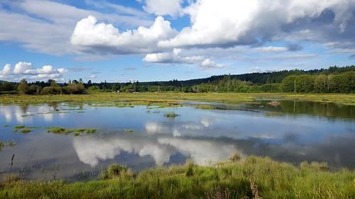 saltwatermarsh belfair kitsappeninsula cloudsstormssunsetssunrises galaxys6 wetland thelerwetlands hightide