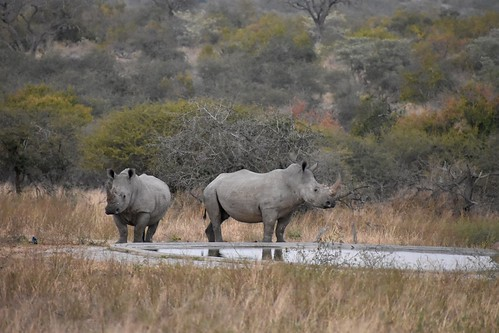 white rhinos | by jng104