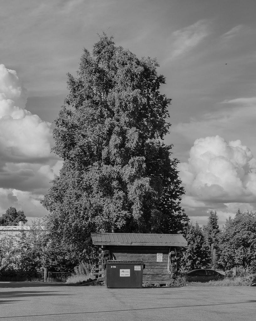 Summer Solstice Fairbanks Shared-63
