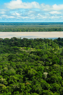 Amazon Rainforest | by CIFOR