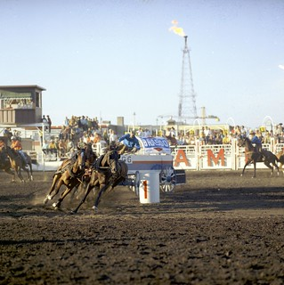 Chuckwagon races at the Calgary Stampede