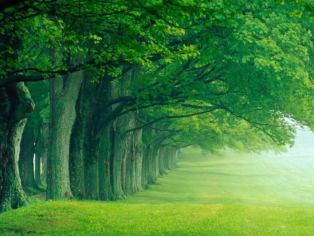 Nature 3d wallpaper - hd wallpaper for desktop image free ...