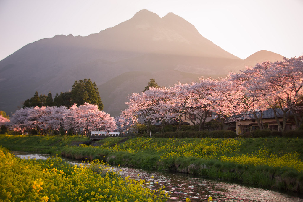 Sakura and sunrise over Mount Yufu