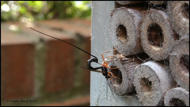 wasp on a bug house