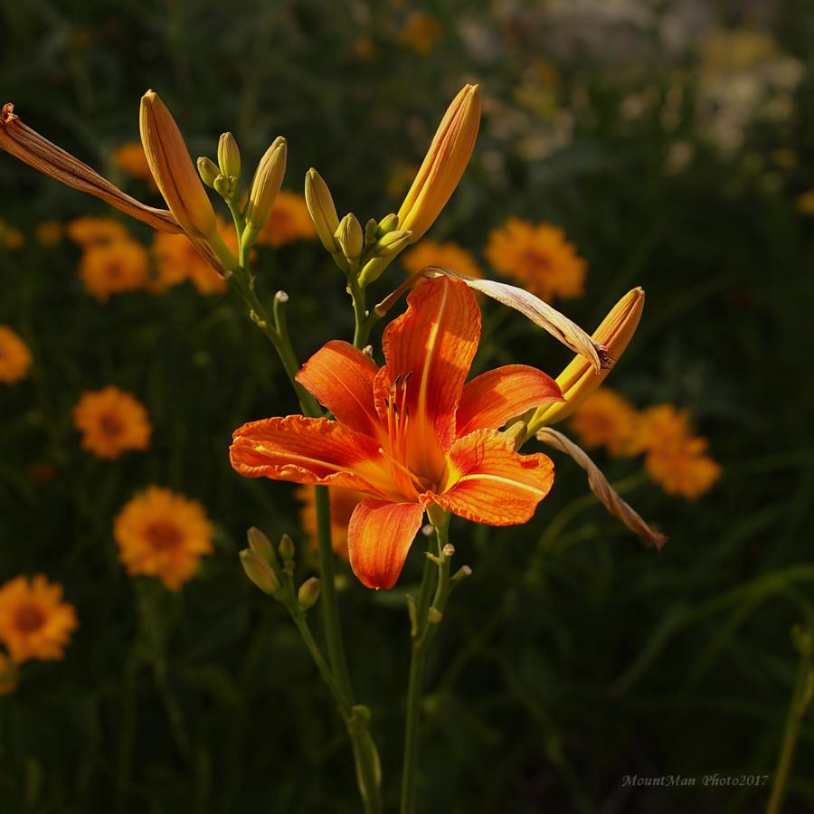 Iz vrtova cvijeća s kamenjara u Slumu kod gospođe Anite (15)
