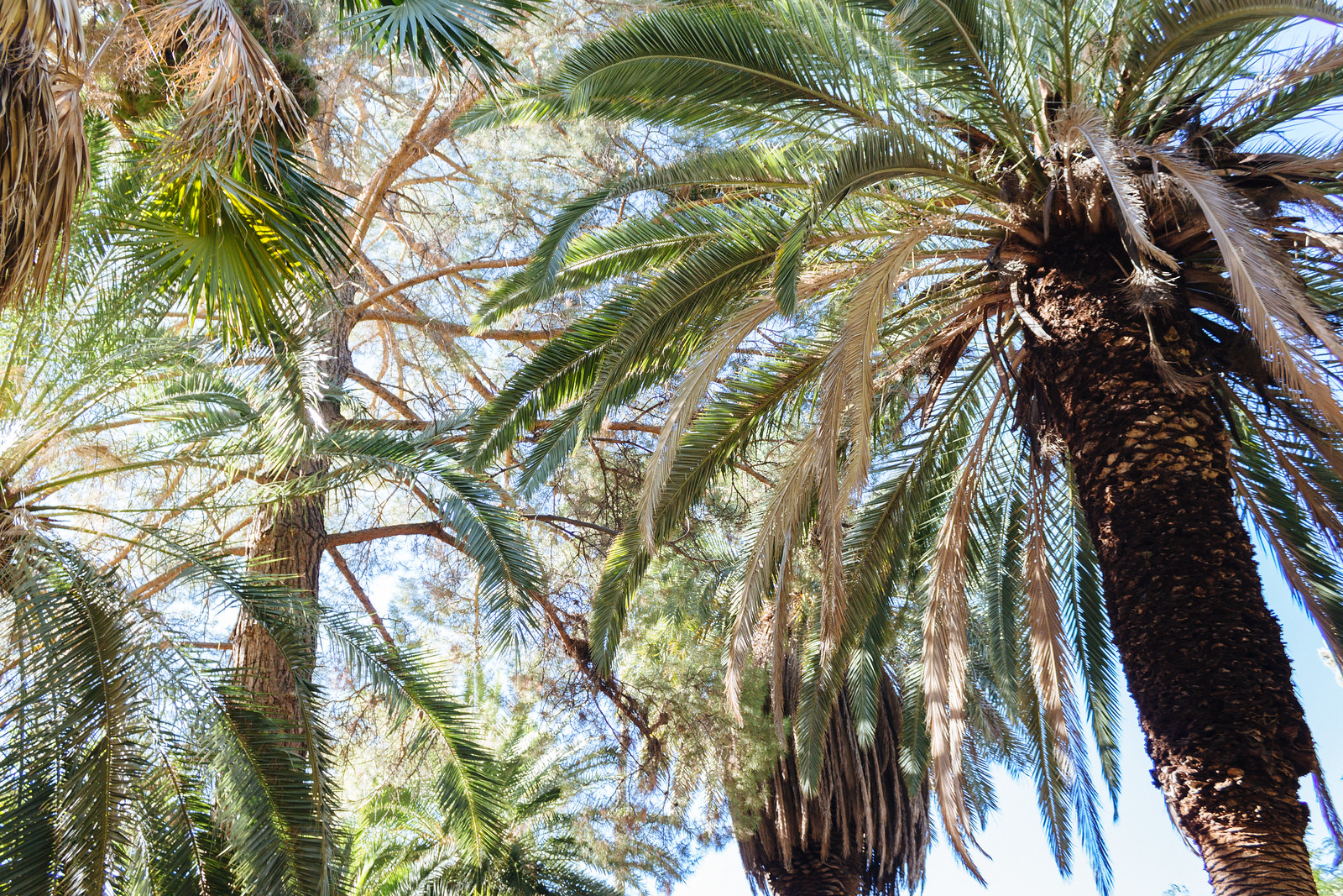 Multiple varieties of palm trees growing densely together