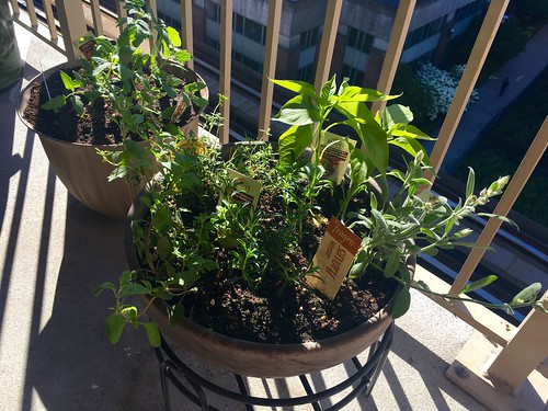 Balcony Herb Garden | by Beth77