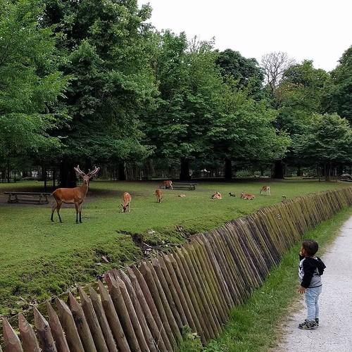 Deer Den Haag