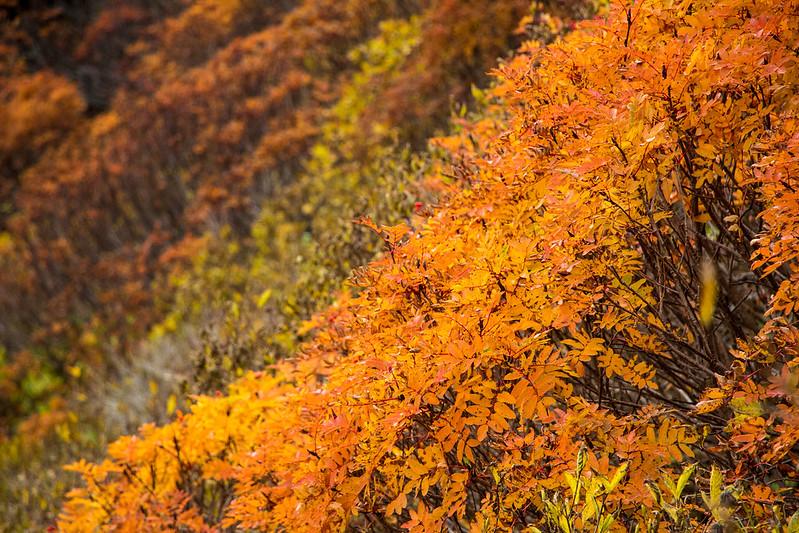 20150918-大雪山黒岳-0197.jpg