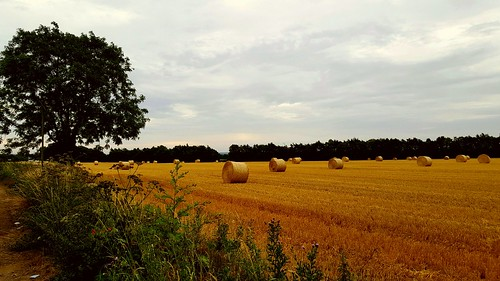 norfolk eastanglia fens farm fenland uk england greatbritain hay trees countryside