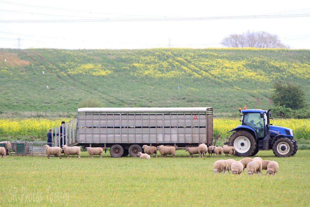 New Holland Tractor & Sheep Trailer   Stuart Rose   Flickr