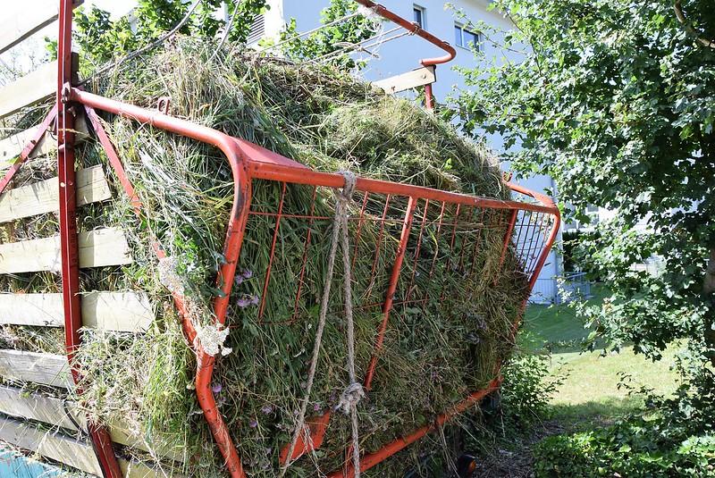 Hay harvest 08.07 (3)